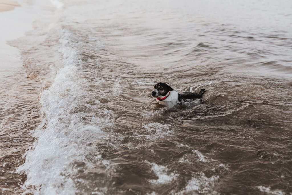 Hur bra är hundar på att simma egentligen?