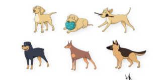 Populäraste hundraserna i Sverige, Norden och Världen