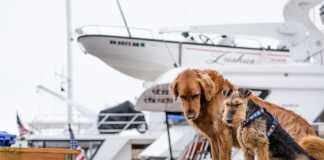 Ta med hunden på sjön - så seglar du säkert
