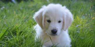 Sveriges 100 populäraste hundnamn - Hela listan