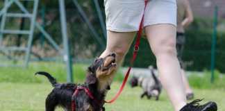 Lydnadstävling och träning med hund - så kommer du igång