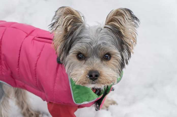 Hundkläder som din hund vill ha i vinter