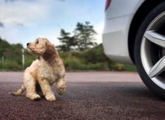 Innan hundvalpen flyttar in - så får du ett säkert hem