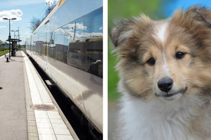 Ta med hunden på tåg - Tips och råd innan resan.