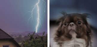 hund rädd för åska - Så lär du den tåla höga ljud och smällar